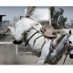 馬油シャンプーの馬